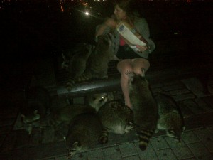 Caylah feeding Raccoons. Do not try this without having your Rabies shot